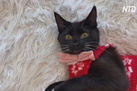 У вашингтонській котячій кав'ярні одягли вихованців у різдвяні светри