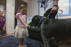 Австралійських дітей учать безпечно поводитися із собаками