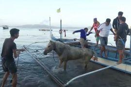 Виверження вулкана на Філіппінах: жителі повернулися, щоб врятувати коней