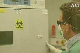 Австралійські вчені відтворили китайський коронавірус