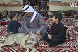 У саудівській сім'ї понад десять років живуть вовки