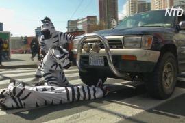 У Болівії на пішохідних переходах працюють «зебри»