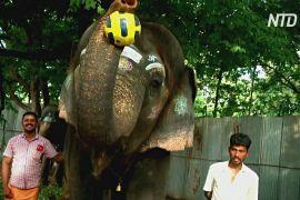 Храмові слони в Індії грали у футбол і виконували мелодії на губній гармошці