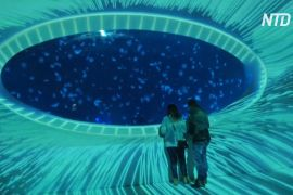 10 000 медуз плавають в акваріумах на даху торгового центру в Празі