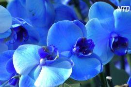 Тисячі орхідей та індонезійських рослин прикрасили Сади К'ю в Лондоні