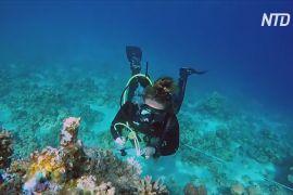 У Єгипті спостерігають за кораловим рифом, який може стати останнім на Землі