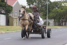 У Кейптауні стали ліпше піклуватися про запряжних коней