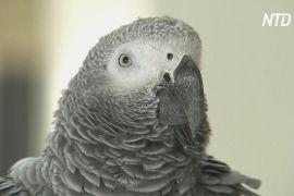 В Ізраїлі подружжя навчило папугу попереджати світ про небезпеку коронавірусу
