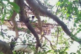 Індійські трудові мігранти змушені самоізолюватися на деревах