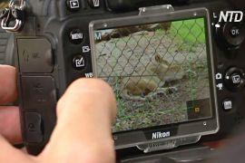У зоопарку Аделаїди серце хижаків перевіряють за допомогою цифрової камери
