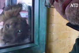 Що відбувається в Лондонському зоопарку під час карантину