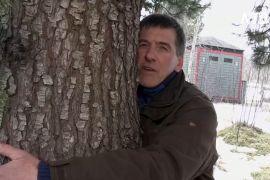 Обійми дерево: ісландські лісничі порадили ліки проти смутку
