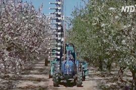 В Ізраїлі придумали штучний запильник, щоб замінити бджіл