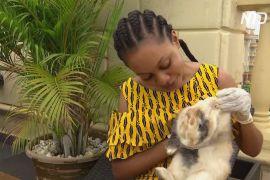 У Нігерії купують кроликів, щоб не нудьгувати на карантині