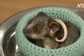 Австралійське подружжя виходжує тварин, які постраждали від лісових пожеж