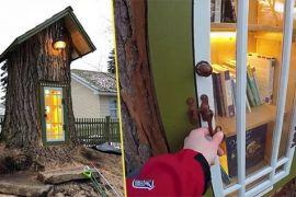 Жінка перетворила 110-літнє дерево на мінібібліотеку