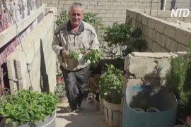 Ферма на даху допомагає сирійцеві годувати сім'ю