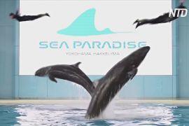 Онлайн-шоу дельфінів і пінгвінів розважають японців під час карантину