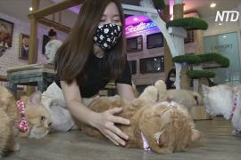 Тайці відвідують котокав'ярню, щоб забути про труднощі карантину