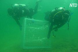 У Сіднейській бухті створили «готелі» для морських коників