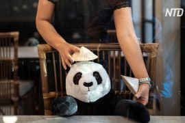 Плюшеві панди — нова тактика соцдистанціювання в ресторані Бангкока