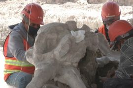 У Мексиці відкопали останки 60 мамонтів