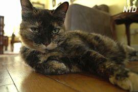 Літня французька кішка перехворіла на COVID-19 й одужала