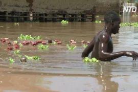 На озері Вікторія в Кенії — найбільша повінь за три покоління