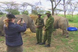 Кенійський заповідник показує життя африканських тварин у соцмережах