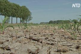 Бельгійські фермери потерпають від найсильнішої посухи за 120 років