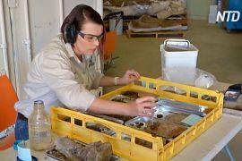 Епідемія вивільнила час для наукових робіт у музеї динозаврів в Австралії
