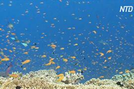 На Великому бар'єрному рифі сталося наймасштабніше знебарвлення