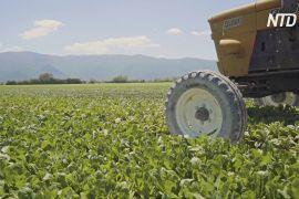 Фермери платять, щоб їхні працівники повернулися на збір урожаю з Марокко