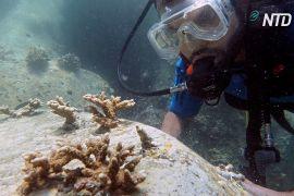 Дайвери будують гігантський кораловий риф біля узбережжя ОАЕ