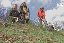 Екологи Австралії висаджують трави, щоб захиститися від пожеж