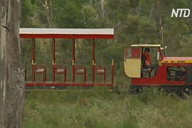 Волонтери Тасманії відновлюють вузькоколійку для туристів