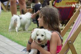 Собаки на один день стали головними гостями парку «Тіволі» в Копенгагені