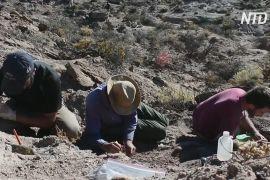 Недорозвинені крила й міцні ноги: в Аргентині відкрили новий вид динозаврів