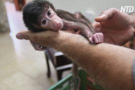 У палестинському зоопарку карантин посприяв чималому приплоду