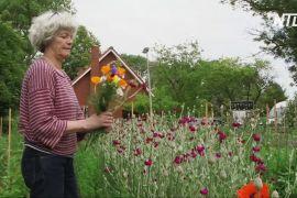Бельгійська ферма пропонує екологічні квіти
