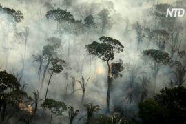 У Бразилії знову горять ліси Амазонії