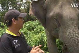 Тайські ветеринари стежать за здоров'ям слонів, які залишилися без роботи під час пандемії