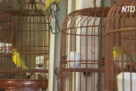 Пташині клітки в Гонконзі раніше висіли на вулиці скрізь, але тепер їх майже немає
