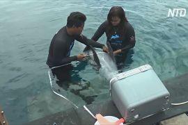 Центр реабілітації на Балі готує до життя в природі врятованих із неволі дельфінів