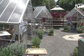 Обід у теплиці: у Лос-Анджелесі працює незвичайне кафе