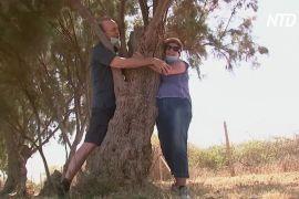 Обійміть дерево: як ізраїльтяни заповнюють нестачу близькості з рідними