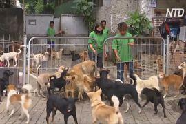 В Індонезії під час пандемії стало більше покинутих собак