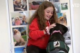Собаки допомагають австралійським дітям повернутися до навчання після карантину