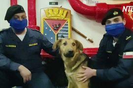 Як чилійські моряки врятували собаку