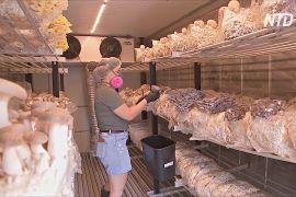 Австралійці організували грибну ферму у вантажних контейнерах
